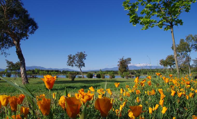 Lac de la raho - fleurs