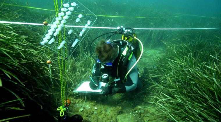 Recherche scientifique - Réserve Marine