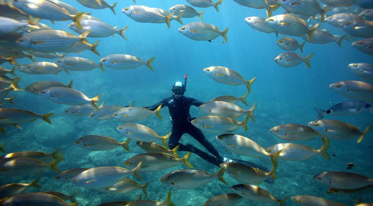 Plongeur dans le sentier sous-marin