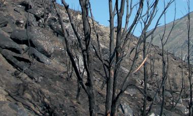 Risque incendie de forêt